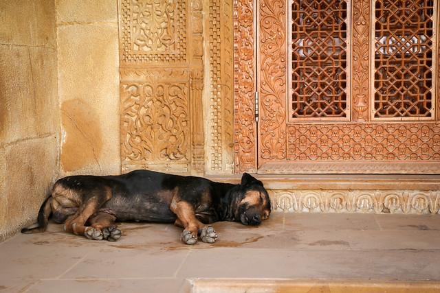 A napping dog in Jaisalmer, India ジャイサルメール お昼寝中のイヌ