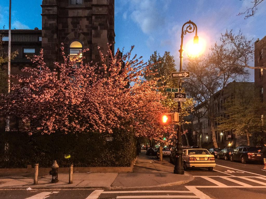 Brooklyn Street Scenes - Tree at Night, Carroll Gardens, B… | Flickr