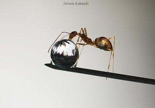 Aroon Kalandy Ant and Drops....... | by aroon_kalandy