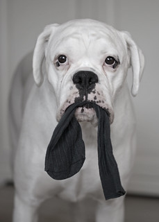 Is this your sock? | by Grymfoting