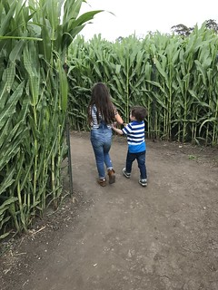 corn maze | by The Spohrs Are Multiplying...