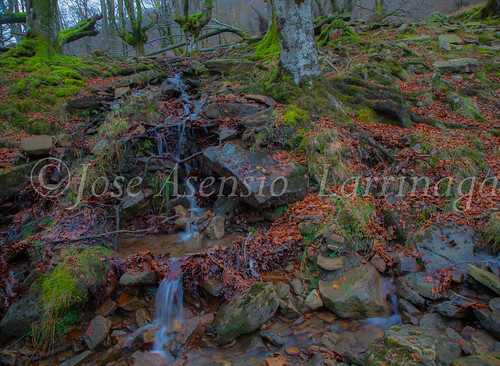 Parque natural de Gorbeia #DePaseoConLarri #Flickr      -2080