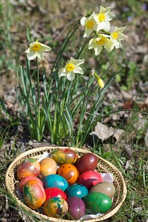 Easter eggs and spring flowers | by kirichkov