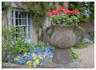 Pot Of Red Geraniums | by peterphotographic