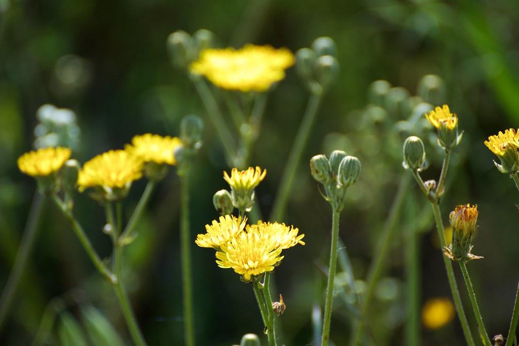 las flores del campo no quieren macetas. | rodrigo echage y
