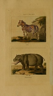 Buffon S Natural History Modernized From The Most Recent Authorities