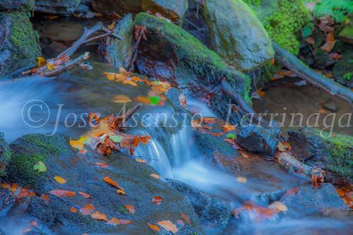 Parque Natural de Gorbeia #DePaseoConLarri #Flickr      -2826