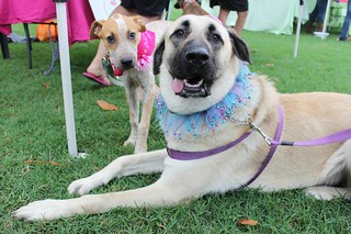 RSPCA Townsville Million Paws Walk 2013 | by RSPCAQld