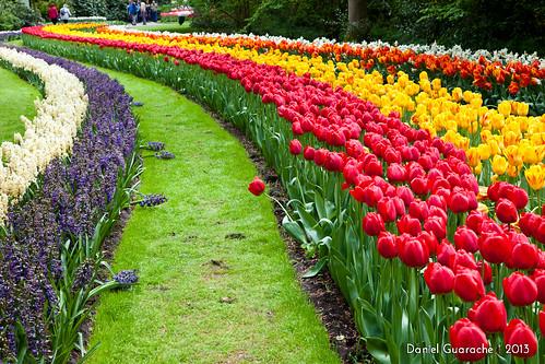 Jardines de tulipanes de keukenhof paises bajos canon - Jardines de holanda ...