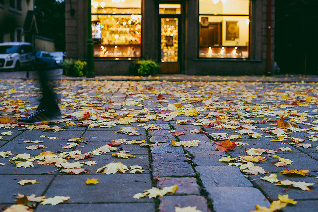 Autumn Leaves | Kaunas Old Town