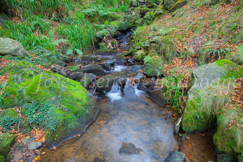 Parque Natural de #Gorbeia #DePaseoConLarri #Flickr      -1459