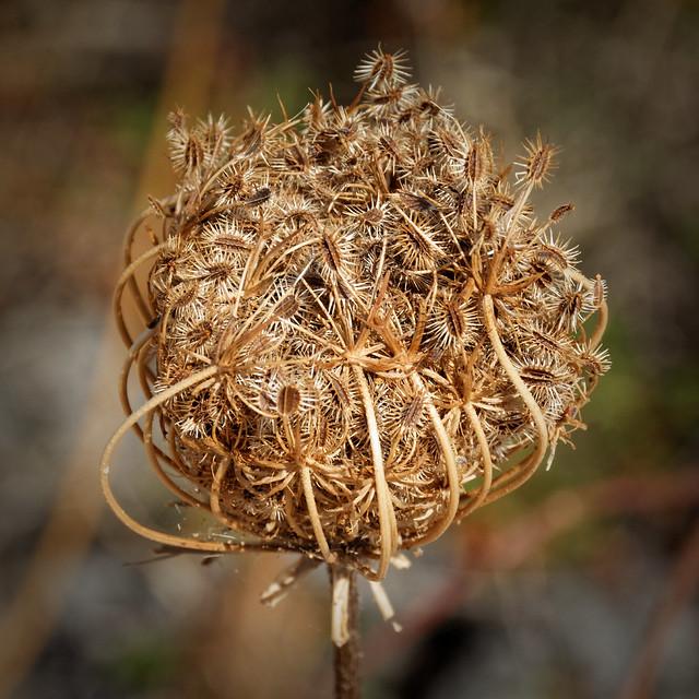 Ball of seeds (Explored)