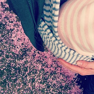 more stripes. more pink. snug little bug in my @sollybabywrap which we both love. more spring! | by sarah ahearn
