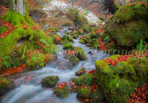 Parque Natural de #Gorbeia #DePaseoConLarri #Flickr      -1950