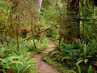 010 Korte trail bij Big Sitka spruce tree