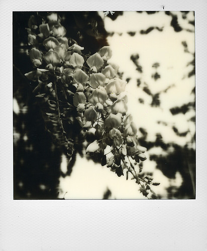 Glycine | by @necDOT