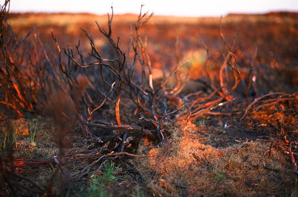 016 Burnt heather