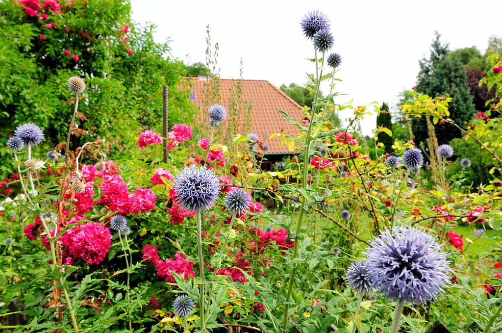 1209 Bunter Bauerngarten Bluhende Blumen Im Vorgarten An Flickr