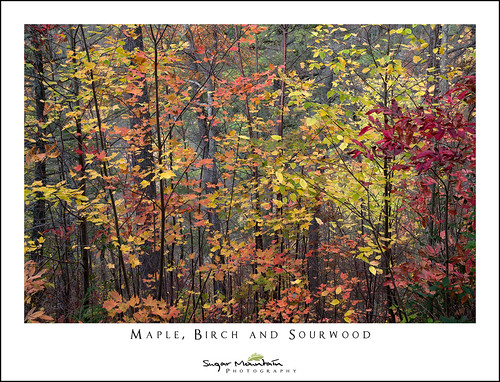 Maple, Birch and Sourwood | by DKNC