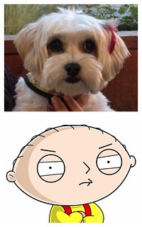 Penny's head is the same shape as Stewie's | by silent (e)