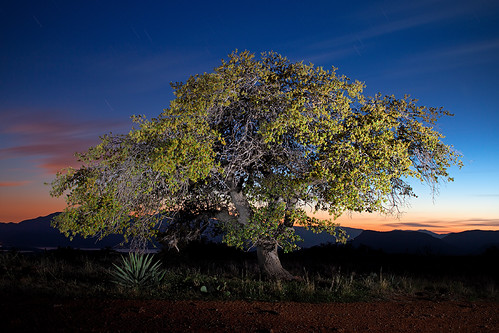 Sierra Ancha Tree Lightpaint | by timaz (TimClarkeHDR.com)