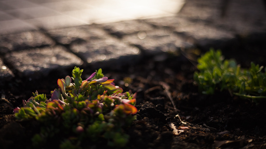 20150521 09 first shot canon ef50mm f1 8 stm canon eos 5d flickr