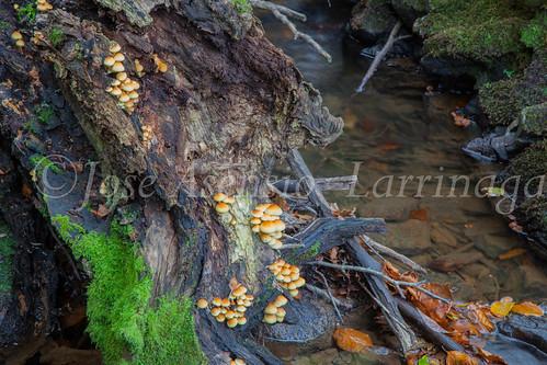 Parque Natural de #Gorbeia #DePaseoConLarri #Flickr      -1461