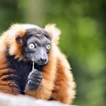 Tiere im Tiergarten