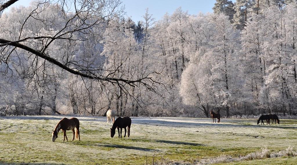 Guten Morgen Winter Guten Morgen Winter Das Foto Ist Flickr
