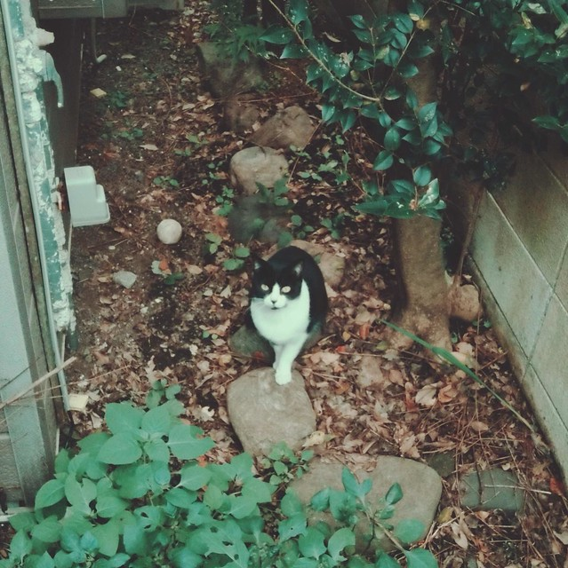 Bicolor cat on stone