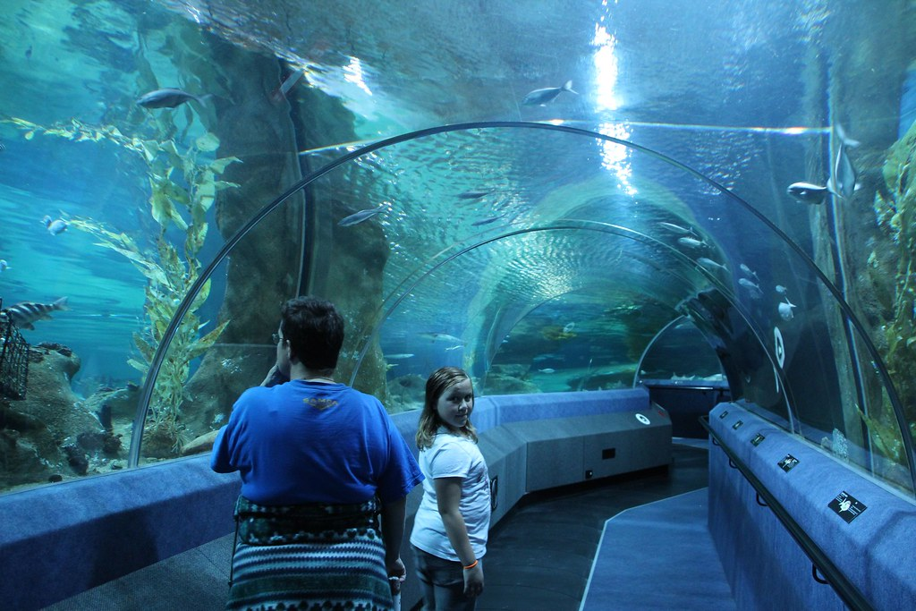 Riding the travelator through main aquarium tank at National Aquarium of New Zealand at Napier