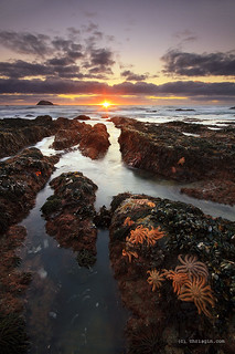 Starfish Sunset | by Chris Gin