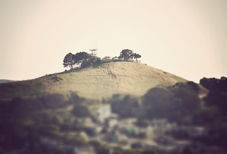 Miniature Bernal Hill | by swedotorp