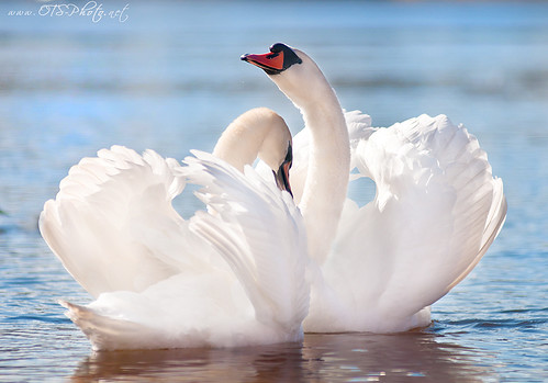 swan song | by onetouchspark
