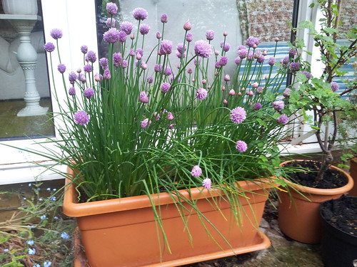 Chives | by Fareham Wine