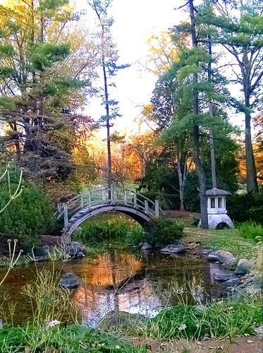 Moon Bridge In Japanese Garden At Fabyan Villa, Batavia, I