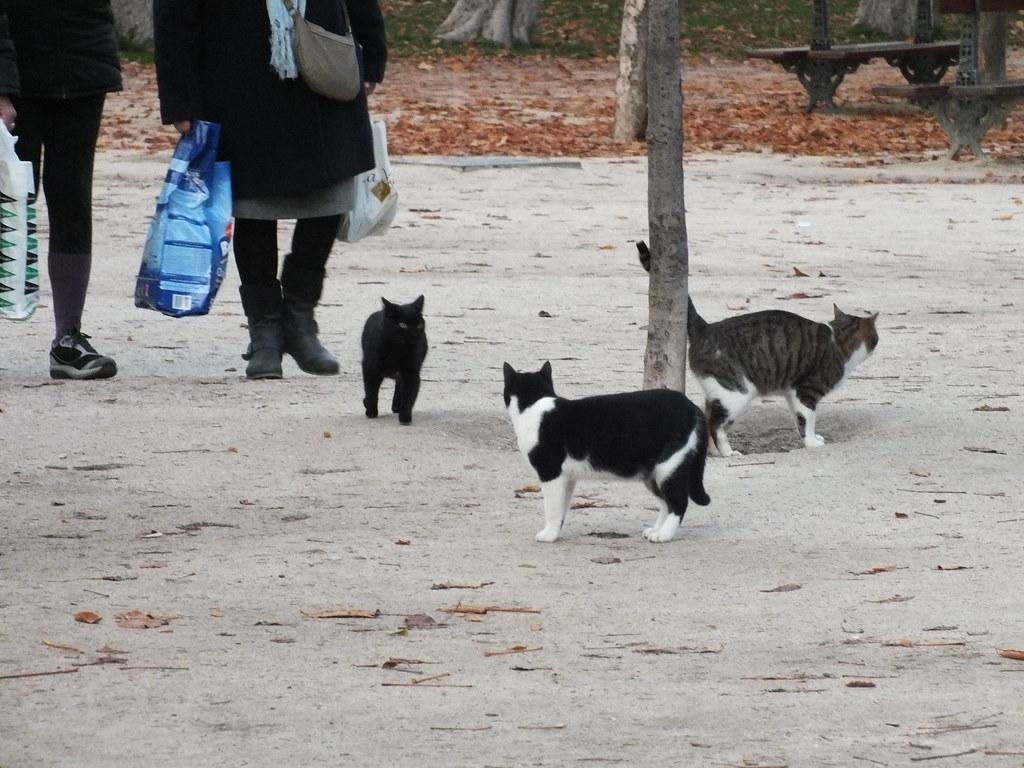 """Резултат с изображение за """"cats madrid parks"""""""