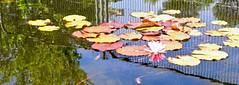 estanque  (8)