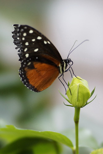 Butterfly Farm 8 | by Cow77