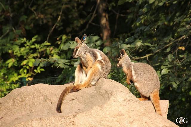 Tierpark Friedrichsfelde 25.09.1646