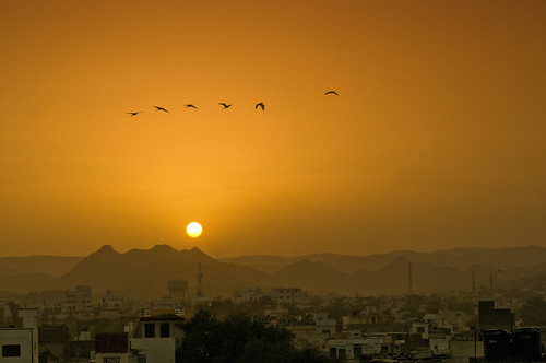 free birds | by Baba G