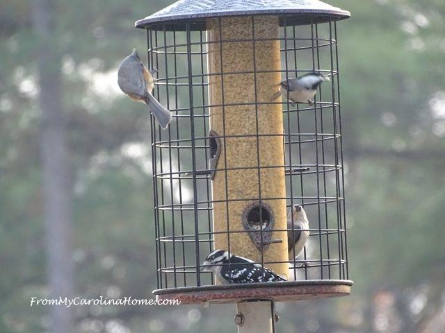 Bird feeder November 3