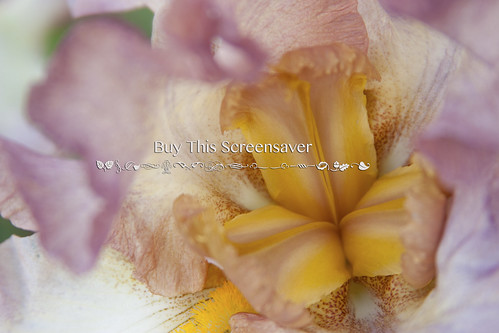 Screensaver_2698watermark | by Nathan.Flickr