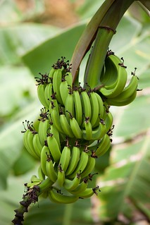 Banana cluster | by hwinther