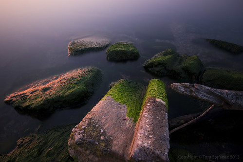 Moss Covered Stones | by Vaughan Weather