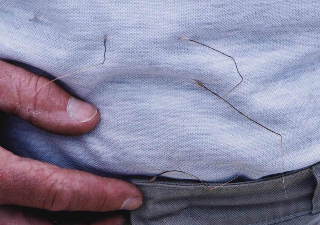 CNG seed attached to a shirt
