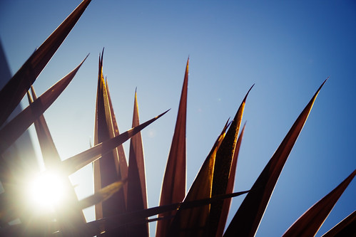 Palm and Sun | by kirberich