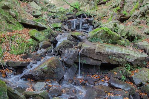 Parque Natural de #Gorbeia #DePaseoConLarri #Flickr      -1466