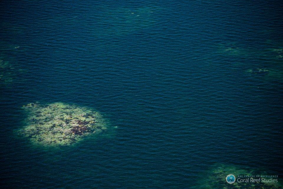 ปะการังฟอกขาวบางส่วนบริเวณเกรตแบร์ริเออร์รีฟ