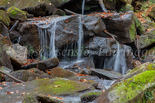 Parque Natural de #Gorbeia #DePaseoConLarri #Flickr      -1469